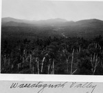 Wassataquoik Valley from Hunt Mt. Fire Tower, 1929 by David Field
