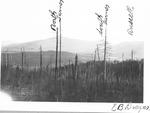 View of Turner Mt., E.B. Draper by David Field