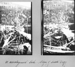 Two Photos Over Wassataquoik Lake to Slope of South Pogy Mt. by David Field