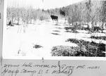 Young Bull Moose on Pogy Mt. near Hayes Camp (J.E. Mahar) by David Field