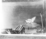 Pulpwood Flying Off End of E.B. Draper'S Pogy Sluice. by David Field