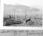South Pogy After the Fire (Next Year?) by David Field