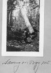 Felling Spruce Tree With Crosscut Saw on Pogy Mt. by David Field