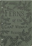Ferns of the Camp Wigwam Region