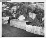 Seafood Festivals 1960 - 1962 by Maine Department of Sea and Shore Fisheries