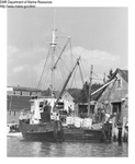 "Dragger ""Canton Prince"" Off Loading at a Maine Wharf by Department of Marine Resources"