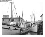 "Draggers ""Romerly"" and ""Althea and Bick"" Tied Up at a Maine Wharf by Department of Marine Resources"