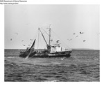 Trawler Hauling Back Net by Department of Marine Resources