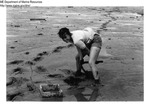 Harvesting Clams on the Mud Flats of Maine