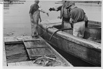 Unloading Dogfish Into Tanks by Maine Department of Sea and Shore Fisheries and Ward's Natural Science Establishment INC. Rochester 9, NY