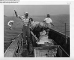 When a School of Dogfish Is Encountered, the Crew Is Kept Busy Hauling the Fish Aboard and Re-Baiting the Hooks by Maine Department of Sea and Shore Fisheries and Ward's Natural Science Establishment INC. Rochester 9, NY
