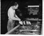 "Placing the Processed Specimens in ""Hardening"" Tanks Where They Become Thoroughly Permeated with the Preserving Fluid by Maine Department of Sea and Shore Fisheries and Ward's Natural Science Establishment INC. Rochester 9, NY"