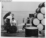 Processed Dogfish in Drums by Maine Department of Sea and Shore Fisheries and Ward's Natural Science Establishment INC. Rochester 9, NY