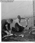 Removing Internal Organs by Maine Department of Sea and Shore Fisheries and Ward's Natural Science Establishment INC. Rochester 9, NY