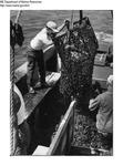 Fishermen Harvesting Seafood