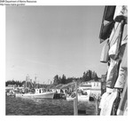 Winter Scene New Harbor, Maine January 1969 by Department of Sea and Shores Fisheries