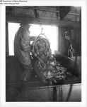 Seafood Processing by Maine Department of Marine Resouces