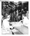 Seafood Processing 006 by Maine Department of Marine Resouces