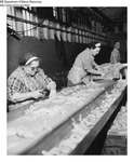 Seafood Processing 010 by Maine Department of Marine Resouces