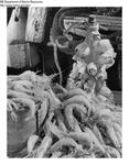 Shrimp Promotion - Product Marketing Image by Maine Department of Marine Resouces