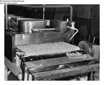 Shrimp Processing - Shrimp Freezing Equipment, Harpswell, Maine by Maine Department of Marine Resouces