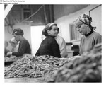 Shrimp Processing - Women at Fish Processing Plant in Boothbay Harbor, Maine by Maine Department of Marine Resouces