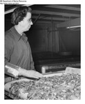 Shrimp Processing - Shrimp on Conveyor at Stinson Processing Plant in Portland, Maine by Maine Department of Marine Resouces