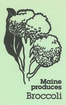 Maine Produces Broccoli by Maine Department of Agriculture