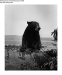 Bears by Maine Department of Inland Fisheries and Game and Ken Gray