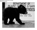Bears by Maine Department of Inland Fisheries and Game and Bill Cross