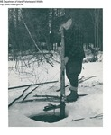 Beaver by Maine Department of Inland Fisheries and Game