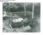 Beaver by Maine Department of Inland Fisheries and Game and Tom Carbone