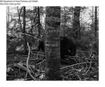 Black Bear Study by Maine Departmentof Inland Fisheries and Wildlife