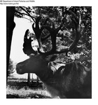 Caribou by Maine Department of Inland Fisheries and Game and Tom Carbone