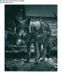 Coyote by Maine Department of Inland Fisheries and Game and Tom Carbone