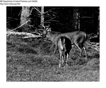 Deer by Maine Department of Inland Fisheries and Game and Tom Carbone