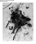 Deer Kills by Maine Departmentof Inland Fisheries and Wildlife