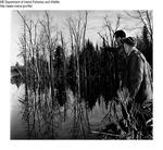 Ducks by Maine Departmentof Inland Fisheries and Wildlife