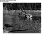 Fish by Maine Departmentof Inland Fisheries and Wildlife