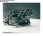 Frogs and Toads by Maine Department of Inland Fisheries and Game and Bill Cross