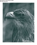 Misc Birds by Maine Department of Inland Fisheries and Game