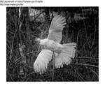 Misc Birds by Maine Department of Inland Fisheries and Game and Bill Cross