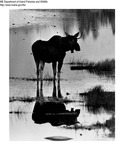 Moose by Maine Department of Inland Fisheries and Game and Bill Cross