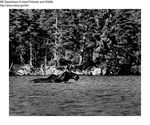 Moose by Maine Department of Inland Fisheries and Game and Ken Gray