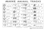 Maine Animal Tracks (Poster) by Klir Beck