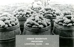 Postcard of Barrels of Potatoes, Limestone, Maine by Frost Memorial Library, Limestone, Maine