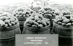 Postcard of Barrels of Potatoes, Limestone, Maine