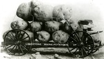 Postcard of a cart of potatoes in Limestone, Maine