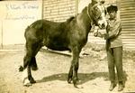 Steve Jones Next to Horse, Limestone, Maine, ca. Early 1900s