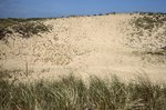 Back Dune replanting - Plum Island by Joseph Kelley